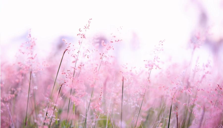 """Primavera nella """"Giornata Mondiale della Felicità"""" lottiamo con Greta Thunberg"""