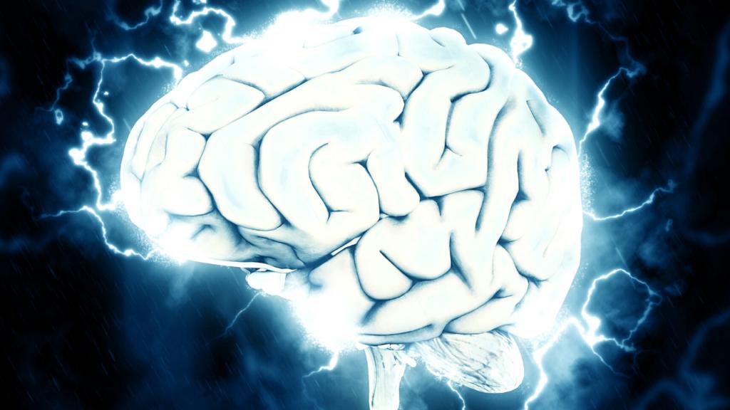 Elisa Sergi cervello